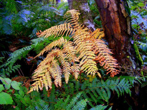 brown fern leaf in autumn