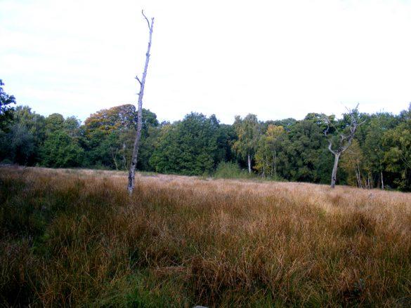 Autumn scene at Acornfield Plantation