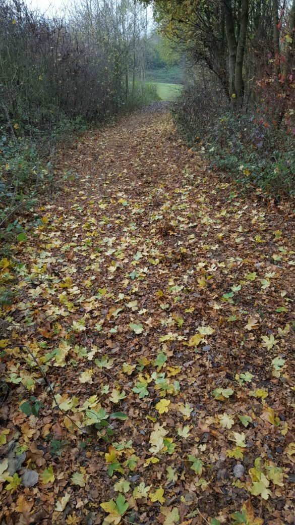 Leaf covered path in autumn