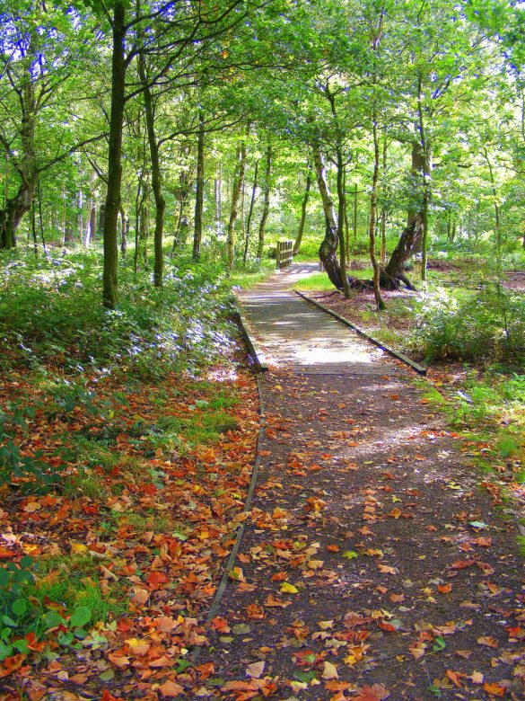Woodland path covered in autumn leaves