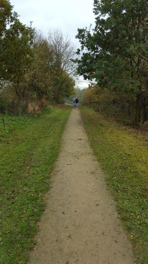 Autumn scene of path through park