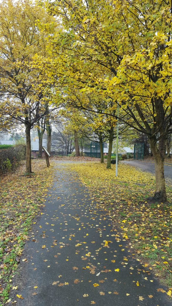 Yellow leaf covered path in park