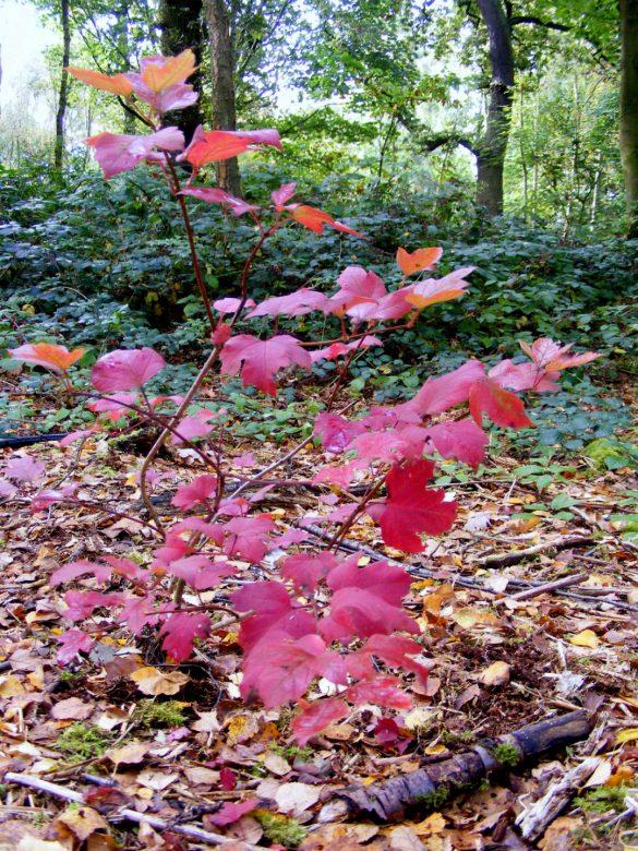 crimson leaves on bush
