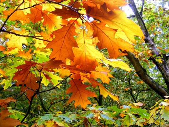 yellow and orange leaves on a tree