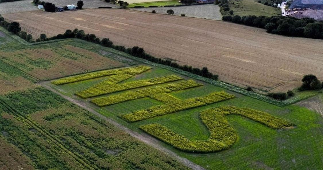 Field of sunflowers, viewed from above, planted to spell out the letters NHS