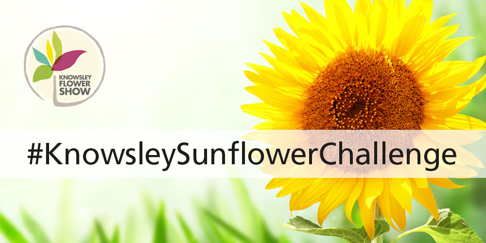 Sunflower and text saying #knowsleysunflowerchallenge